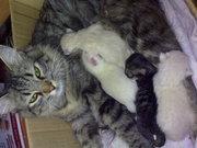Котята...ищем добросовестных хозяев для котят...должны быть пушистыми.