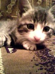 Отдам в добрые руки котёнка!