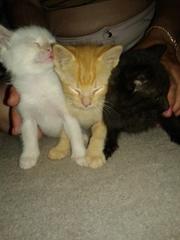три котенка-подкидыша ищут дом